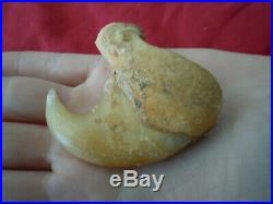 1 Rare big antique lion dew claw Panthera Leo 3.5 inches long B