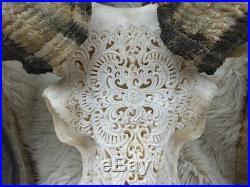 Huge Real Carved Goat Longhorn Animal Skull RARE Big Size Carved Cow Bull Bali