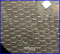 Pre dinosaur fossil plant big classic coal age lycopod rare Sigillaria elegans