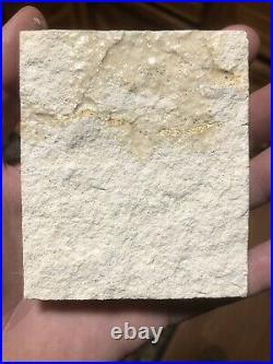 Very Rare! BIG Pterosaur Tooth! Solnhofen Jurassic, Rhamphorhynchus Species